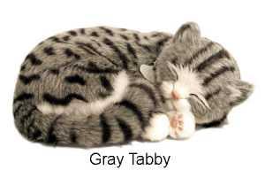 CANE GATTO RESPIRA GRAY TABBY - Luire' (8314)